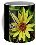Sunflower Along Etiwanda Falls Trail In San Gabriel Mountains-california  Coffee Mug
