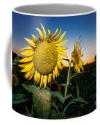 Sunflower Evening Coffee Mug