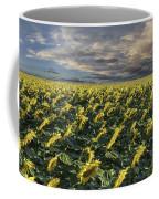 Sunflower Fields Near Denver International Airport Coffee Mug