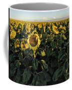 Sunflower Fields  Coffee Mug