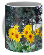 Sunflowers And Pine Cones Coffee Mug by Will Borden