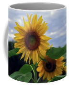 Sunflowers Close Up Coffee Mug