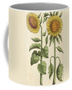 Sunflowers Illustration From Florilegium Coffee Mug