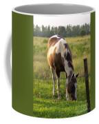 Sunkissed Tobiano Coffee Mug