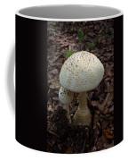 Sunlight On The Cap Coffee Mug