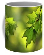 Sunlit Maple Leaves In Spring Coffee Mug
