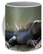Sunning Gray Iguana Sitting Beside Water Coffee Mug
