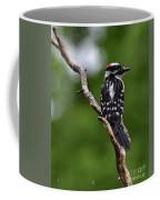 Sunshine Needed - Male Downy Woodpecker Coffee Mug