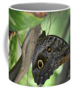 Superb Markings On An Owl Butterfly In A Garden Coffee Mug
