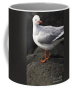 Suprised Australian Seagull Coffee Mug