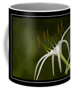 Swamp Lily Coffee Mug