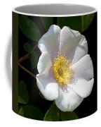 Swamp Mallow  Coffee Mug