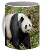 Sweet Chinese Panda Bear Sitting Down In Grass Coffee Mug