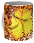 Sycamore Leaf  In Fall Coffee Mug