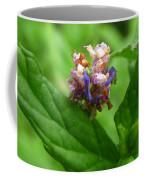 Synchlora Aerata Caterpillar Coffee Mug
