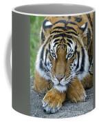 Takin A Break Tiger Coffee Mug