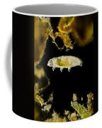 Tardigrade, Or Water Bear, Lm Coffee Mug