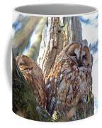 Tawny Owls Coffee Mug
