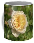 Tchaikovski Hybrid Tea Rose, White Rose Originally Produced By  Coffee Mug