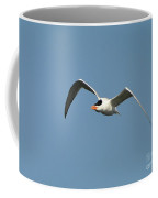Tern Flight Coffee Mug by Al Powell Photography USA