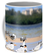 Terns At Fort Myers Coffee Mug