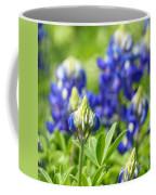 Texas Bluebonnets 003 Coffee Mug