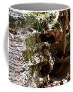 Textures On A Giant Sequoia Coffee Mug
