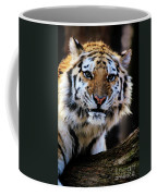 That Tiger Look Coffee Mug