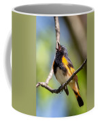 The American Redstart Coffee Mug