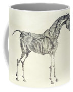 The Anatomy Of The Horse Coffee Mug by George Stubbs