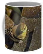 The Bath - American Goldfinch - Spinus Tristis Coffee Mug
