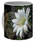 The Beauty Of Cactus Coffee Mug