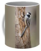 The Black Capped Chickadee Coffee Mug