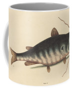 The Cat Fish (silurus Catus) Coffee Mug