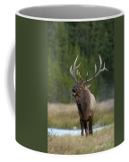 The Challenger Coffee Mug by Sandra Bronstein