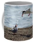 The Courtship Feeding - Series 1 Of 3 Coffee Mug