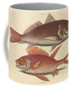 The Croker (perca Undulata) Coffee Mug