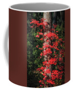 The First Maple Of Autumn Coffee Mug