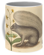 The Grey Fox Squirrel (sciurus Cinereus) Coffee Mug