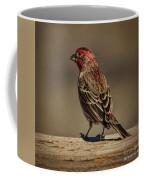 The House Finch Coffee Mug
