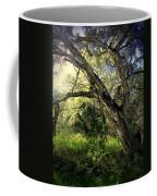 The Mighty Oaks Of Garland Ranch Park 1 Coffee Mug
