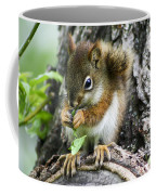The Most Adorable Baby Squirrel Coffee Mug