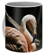The Sacred Old Flamingoes Coffee Mug