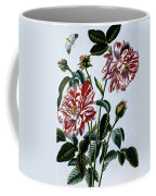 The Variegated Rose Of England Coffee Mug