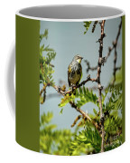 The  Yellow-rumped Warbler Coffee Mug