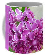 This Lilac Has Flowers With A White Edging. 4  Coffee Mug