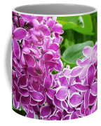 This Lilac Has Flowers With A White Edging.1 Coffee Mug