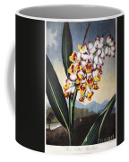 Thornton: Shell Ginger Coffee Mug