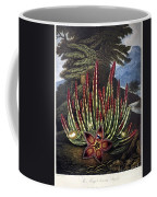 Thornton: Stapelia Coffee Mug