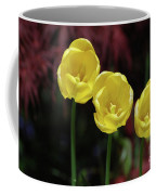 Three Blooming Yellow Tulips Of Different Heights Coffee Mug